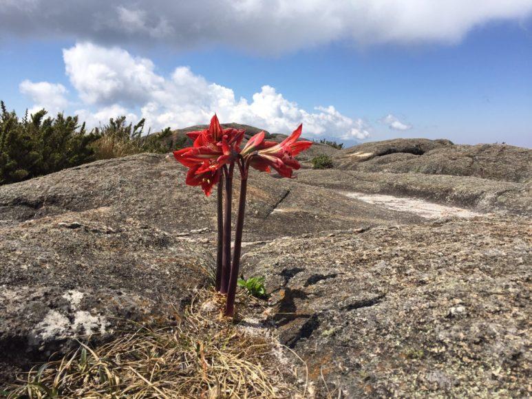 Flores Pico dos Marins