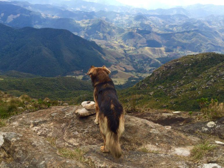 Cachorro Pico dos Marins